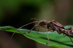 As formigas s?o ?teis para a agricultura org?nica fotografia de stock