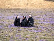 As freiras no prado da montanha com açafrão florescem a florescência Imagens de Stock Royalty Free