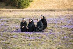 As freiras no prado da montanha com açafrão florescem a florescência Foto de Stock Royalty Free