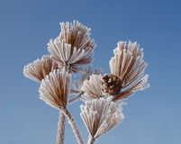 As The Frost Burns Off Royalty Free Stock Photos