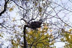 As fugas de Rosecrans da fortaleza incluem os ninhos do pássaro abandonados após a estação do aninhamento fotos de stock royalty free