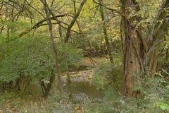 As fugas de Rosecrans da fortaleza são cobertas por escuro - árvores e arbustos verdes foto de stock royalty free