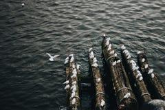 As gaivota brancas estão sentando-se em um fazer logon que a costa da ponte perto da gaivota da água uma voou acima Gravado do fi Imagens de Stock