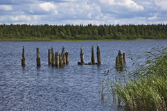 As gaivota em colunas de madeira aproximam o riverbank Fotos de Stock Royalty Free