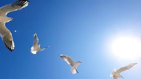 As gaivota voam em cima contra o c?u no bom tempo Gaivota no fundo do movimento lento do c?u, branco maior filme