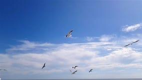 As gaivota voam em cima contra o c?u no bom tempo Gaivotas brancas maiores no fundo do c?u video estoque