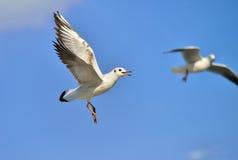 As gaivotas Fotografia de Stock