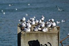 As gaivotas aquecem na primavera o sol foto de stock royalty free