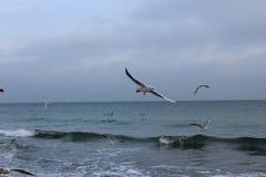 As gaivotas com fome estão esperando o pão dos povos imagem de stock royalty free