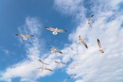As gaivotas do grupo estão voando no céu azul da nuvem Foto de Stock Royalty Free