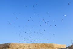 As gaivotas estão rodando acima do céu azul de brilho Foto de Stock
