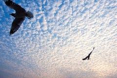 As gaivotas estavam voando ao redor no porto com fundo nebuloso, Sittwe Myanmar foto de stock
