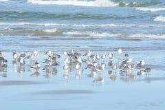 As gaivotas ficarem junto por razões de segurança quando na areia do oceano imagens de stock