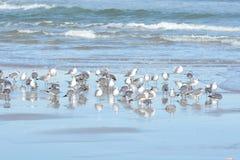 As gaivotas moldaram sua grande sombra na areia do oceano fotos de stock