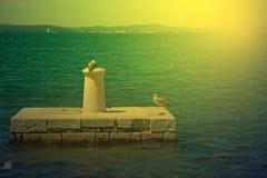 As gaivotas que estão em um cargo de pedra no por do sol iluminam-se Fotos de Stock Royalty Free