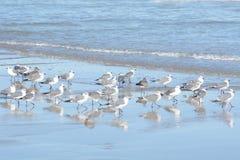 As gaivotas refletem fora da associação maré da ilha fotos de stock