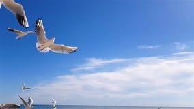 As gaivotas travam o alimento contra o céu de um movimento lento video estoque