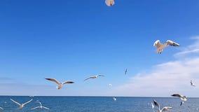 As gaivotas travam o alimento contra o céu de um movimento lento vídeos de arquivo