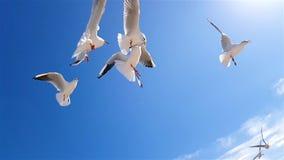 As gaivotas travam o alimento contra o c?u de um movimento lento video estoque