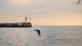 As gaivotas voam na perspectiva do céu da noite video estoque