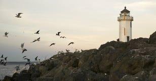 As gaivotas voam o ponto Wilson Lighthouse da barreira da rocha dos Shorebirds Foto de Stock