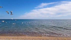 As gaivotas voam sobre a costa video estoque