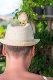 As galinhas do bebê equipam sobre a cabeça Imagens de Stock Royalty Free
