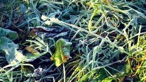 As geadas da manhã do outono na grama video estoque