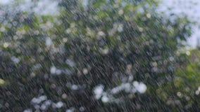 As gotas da chuva do verão em árvores, pingos de chuva caem do céu, chuva através da luz do sol vídeos de arquivo