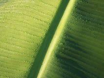 As gotas de orvalho da folha da banana fecham-se acima Foto de Stock Royalty Free