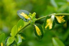 As gotas molham em verde molharam as folhas após a chuva Foto de Stock