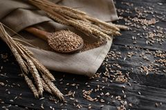 As grões inteiras do trigo são derramadas em uma colher de madeira Agricultura, colheita do cereal imagens de stock royalty free