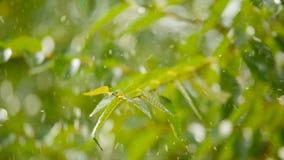 As grandes gotas da chuva caem lentamente nas folhas verdes vídeos de arquivo