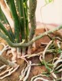 As hastes textured verdes de uma planta, algumas deles shredded fotos de stock