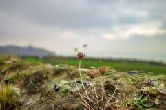 As hastes verdes das plantas no castelo de Dôvar fotos de stock