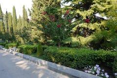 As hortaliças cênicos que crescem em um parque com uma cama de flor com vermelho florescem o abeto vermelho alto com grandes ramo Foto de Stock