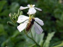 As imagens as mais bonitas da flor para o design web e o logotipo Imagem de Stock Royalty Free