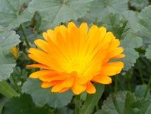 As imagens as mais bonitas da flor para seu designs2 especial Foto de Stock