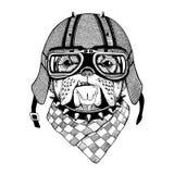 As imagens do vetor do vintage dos cães para o t-shirt projetam para a motocicleta, bicicleta, velomotor, clube do 'trotinette',  Foto de Stock Royalty Free