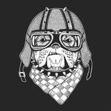 As imagens do vetor do vintage dos cães para o t-shirt projetam para a motocicleta, bicicleta, velomotor, clube do 'trotinette',  Imagens de Stock