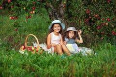 As irmãs da menina dois colhem o fundo cor-de-rosa vermelho da grama verde das maçãs da colheita da cesta do chapéu das árvores d foto de stock royalty free