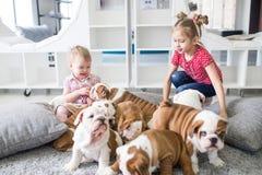 As irmãs das meninas tomam do buldogue do inglês dos cachorrinhos Fotos de Stock Royalty Free