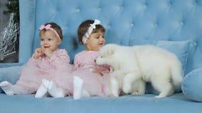 As irmãs gêmeas em vestidos cor-de-rosa e as curvas nos cachorrinhos macios brancos próximos principais sentam-se no sofá filme