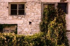 As janelas e as plantas Imagem de Stock