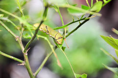 As lagartas comem as folhas Fotos de Stock