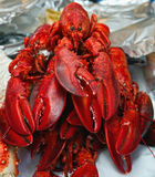 As lagostas Foto de Stock Royalty Free
