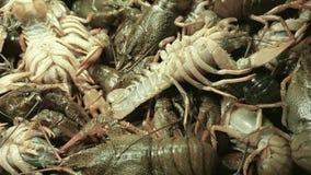 As lagostas do rio de Live European venderam no mercado de peixes vídeos de arquivo