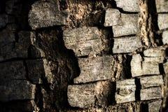 As listras da casca da árvore velha imagens de stock royalty free