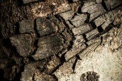 As listras da casca da árvore velha fotografia de stock royalty free