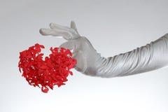 As luvas brancas de mulher elegante que guardam o coração deram forma a flores no fundo branco Fotos de Stock Royalty Free